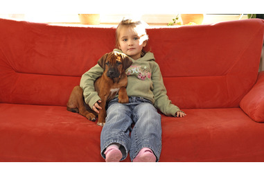 Pets In The Family Pregnancy Birth And Baby
