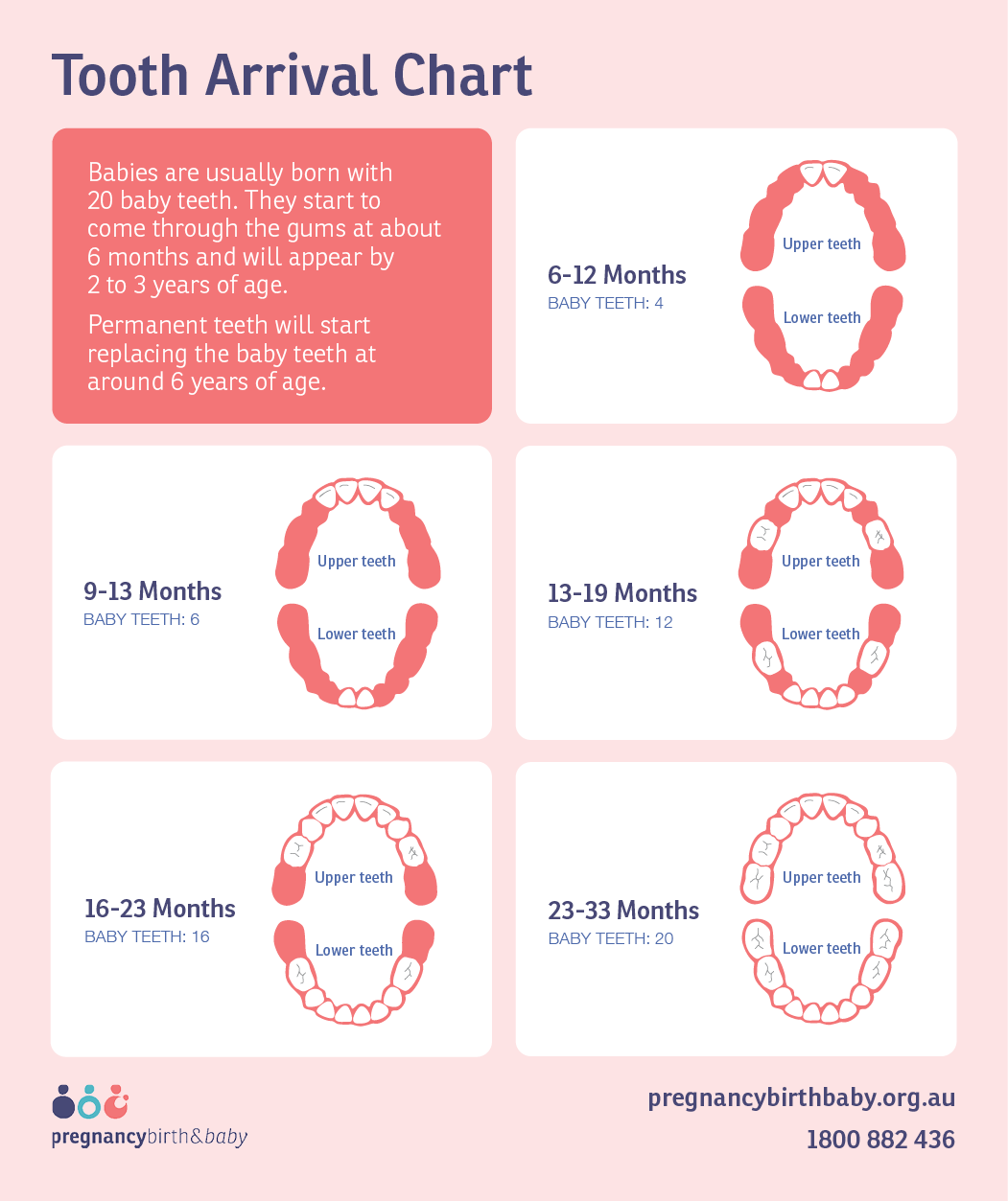 Tooth arrival chart - infographic