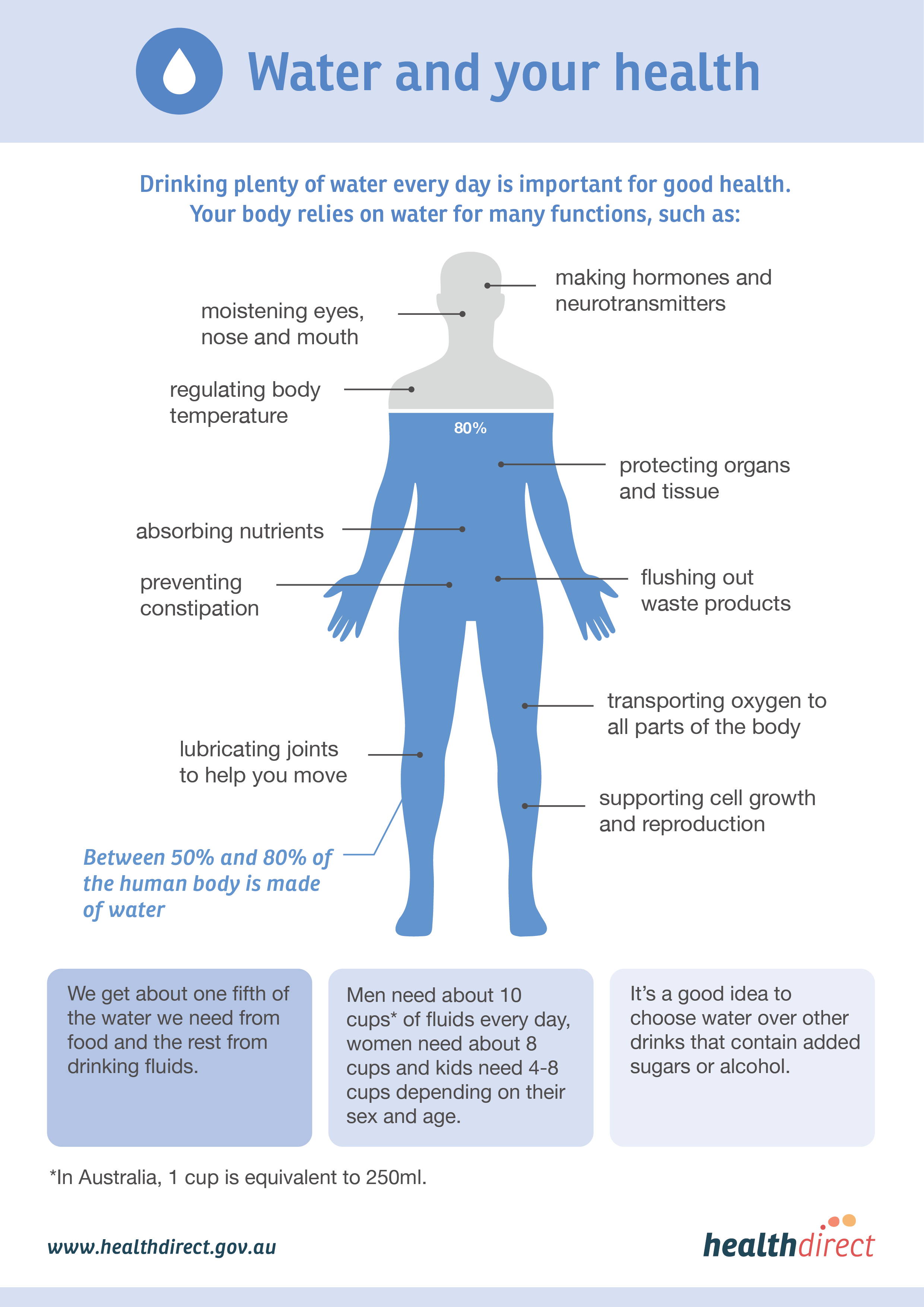 Infographic about water and its functions in the human body
