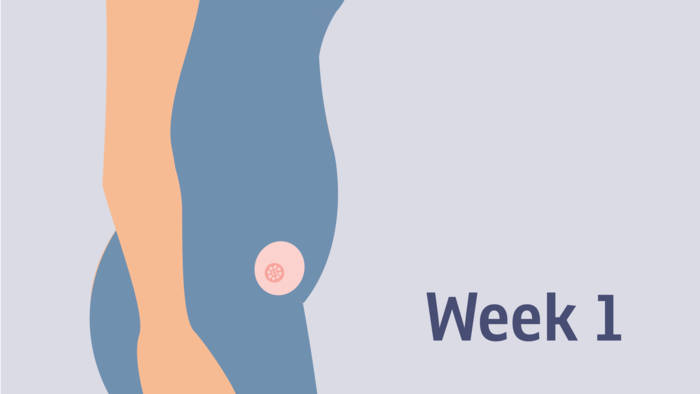 Pregnancy at weeks 1 to 4 | Pregnancy Birth and Baby