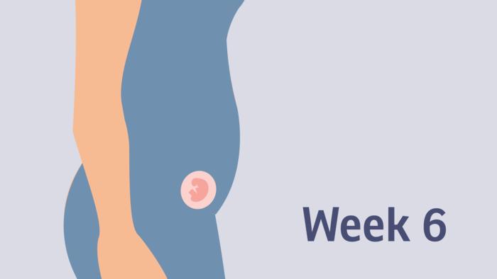 6 symptoms week pregnancy 6 DPO: