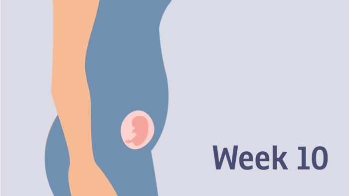 Pregnancy at week 10 | Pregnancy Birth and Baby