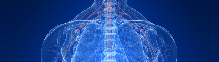 Your nervous system controls much of what your body does.
