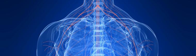 Nervous system | healthdirect