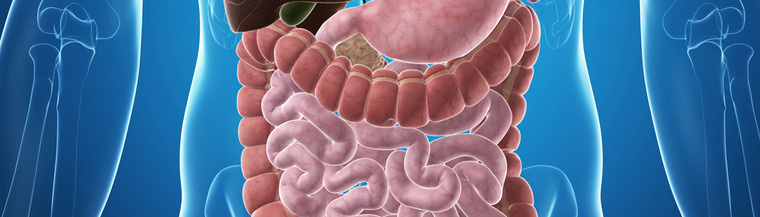 The digestive system breaks down food into nutrients.