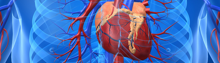 The heart pumps blood around the body to supply tissues with nutrition and oxygen.