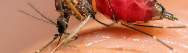 Malaria is a disease spread by the bite of infected mosquitos.