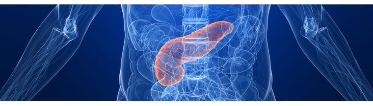The pancreas is a thin, 15 cm long organ that lies behind the stomach and under the liver.