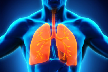 respiratory system   healthdirect, Cephalic Vein