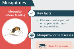Insect bites and stings | healthdirect