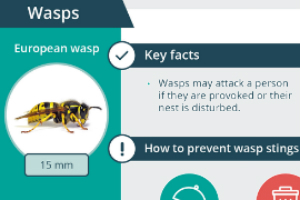 How to treat swollen leg from wasp sting