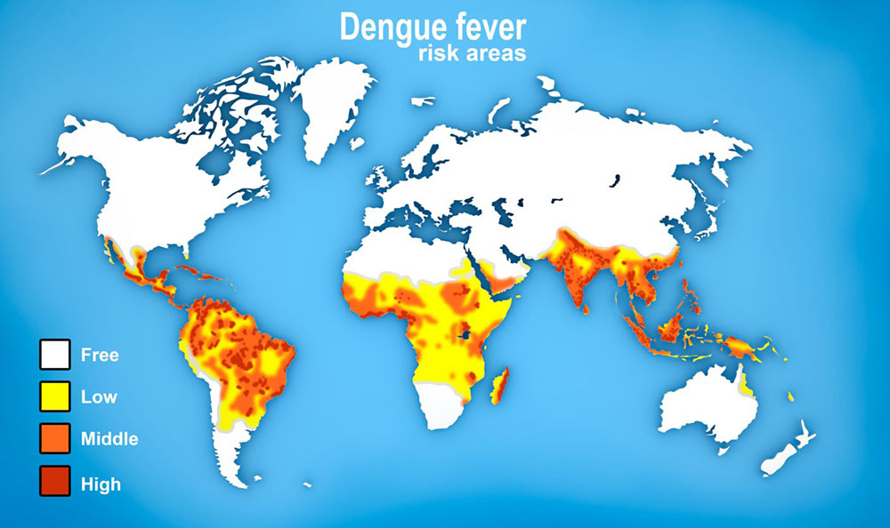 Dengue fever | healthdirect