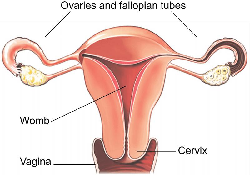 Laparoscopic Hysterectomy Healthdirect