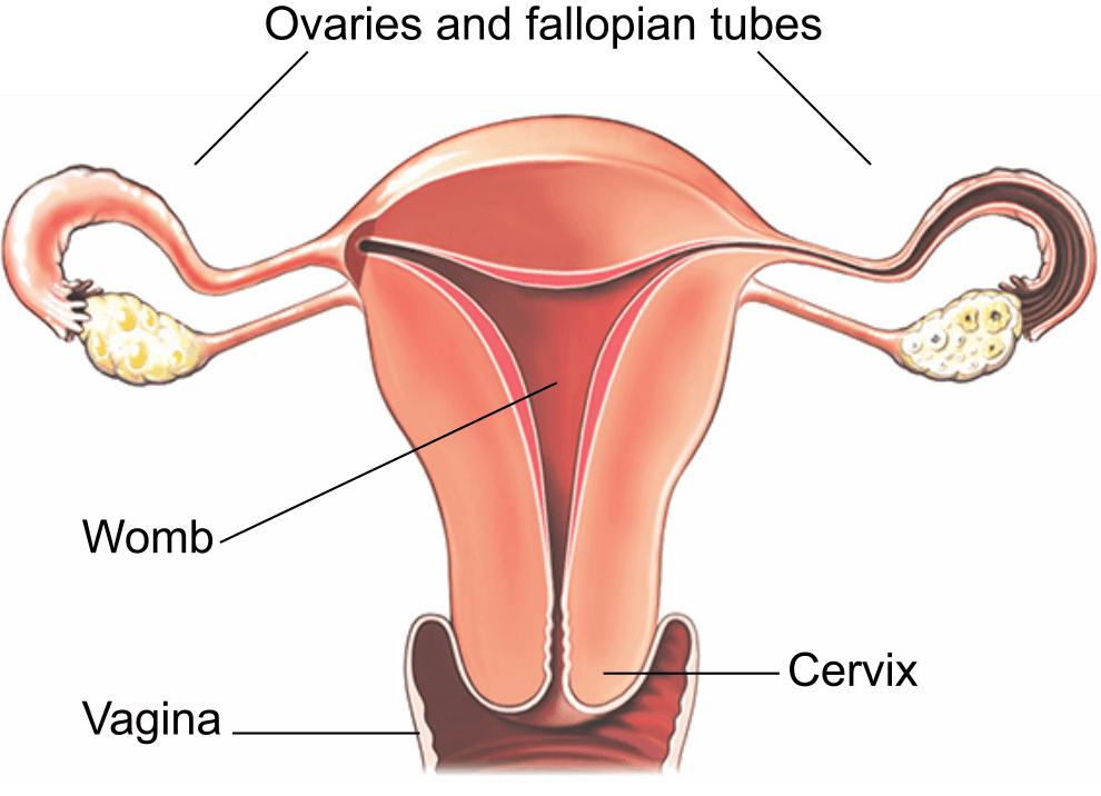 diagram after hysterectomy wiring diagram document guide diagram of body after hysterectomy diagram after hysterectomy #7