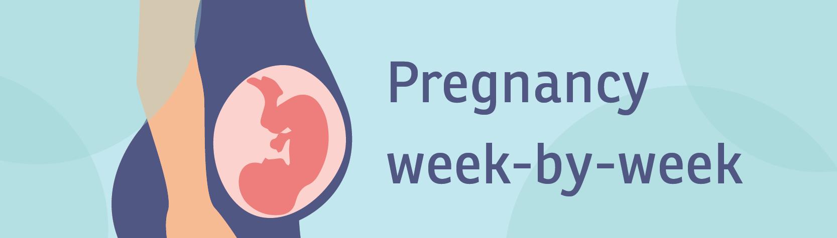 Pregnancy week-by-week